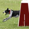 Fast And Easy Ways To Train Your Dog